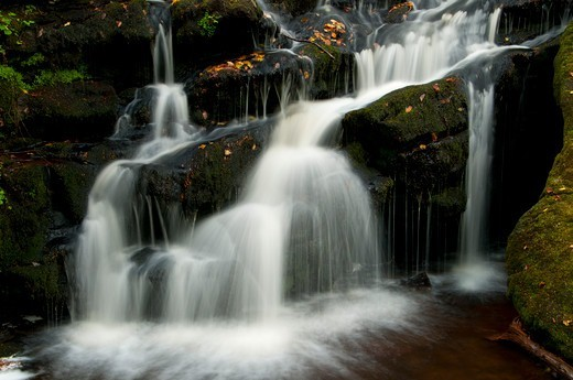 Stock Photo: 1596-3257 Waterfall in a forest, Day Pond Brook Falls, Salmon River State Forest, New London County, Connecticut, USA