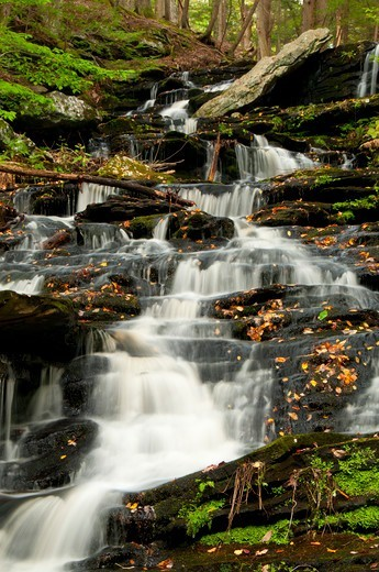 Stock Photo: 1596-3260 Waterfall in a forest, Day Pond Brook Falls, Salmon River State Forest, New London County, Connecticut, USA