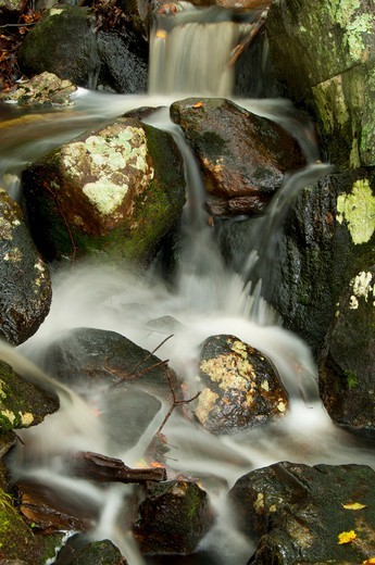 Stock Photo: 1596-3273 Inflow creek along Green Fall Pond Loop, Pachaug State Forest, New London County, Connecticut, USA