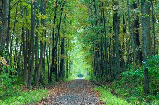 Stock Photo: 1596-3285 Rail trail passing through a forest, Air Line State Park Trail, Connecticut, USA
