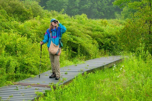 Woman watching bird with binoculars, Major Michael Donnelly Land Preserve, South Windsor, Hartford County, Connecticut, USA : Stock Photo