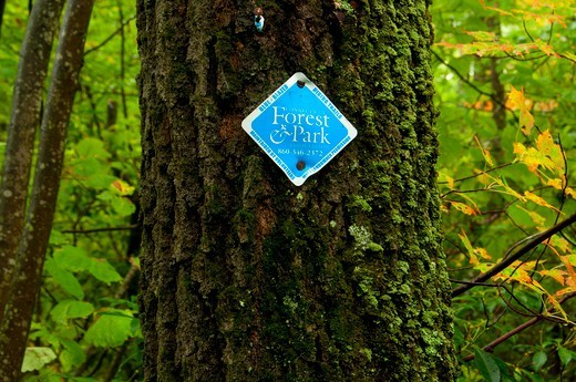 Stock Photo: 1596-3333 Trail marker on a tree, Tunxis Trail, Barkhamsted, Connecticut, USA