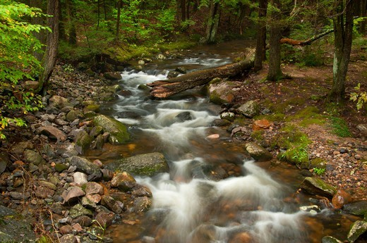 Creek flowing through a forest, Beaver Brook, Peoples State Forest, Barkhamsted, Connecticut, USA : Stock Photo