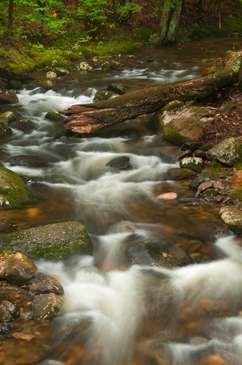 Stock Photo: 1596-3337 Creek flowing through a forest, Beaver Brook, Peoples State Forest, Barkhamsted, Connecticut, USA