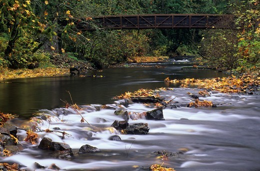 USA, Oregon, Silver Falls State Park, Silver Creek, Creek with autumn leaves : Stock Photo
