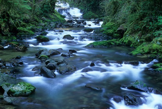 Stock Photo: 1596-3375 USA, Oregon, Siuslaw National Forest, Sweet Creek Falls Trail, Sweet Creek