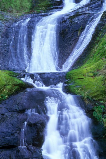USA, Oregon, Siuslaw National Forest, Sweet Creek Falls Trail, Sweet Creek tributary : Stock Photo