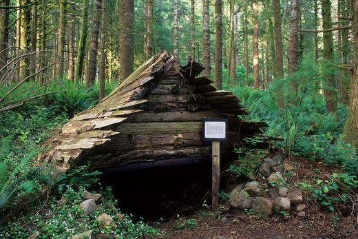 USA, Oregon, Hitsi (indian shelter) on Cape Mountain Trails, Siuslaw National Forest : Stock Photo