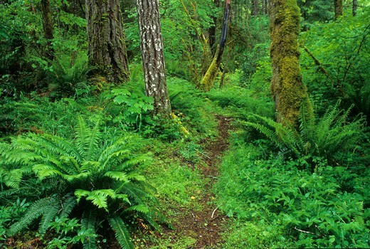 Stock Photo: 1596-3427 USA, Oregon, Taylor Creek Trail, Siskiyou National Forest