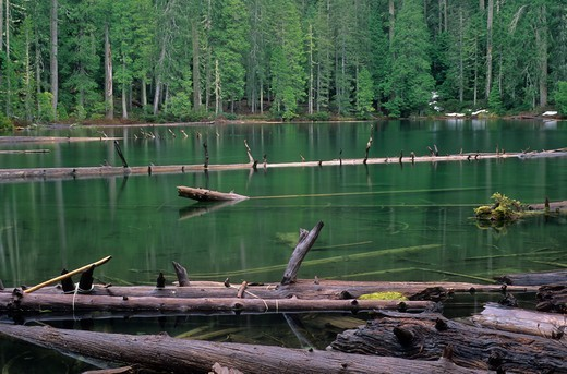 USA, Oregon, Babyfoot Lake, Babyfoot Lake Botanical Area, Kalmiopsis Wilderness, Siskiyou National Forest : Stock Photo