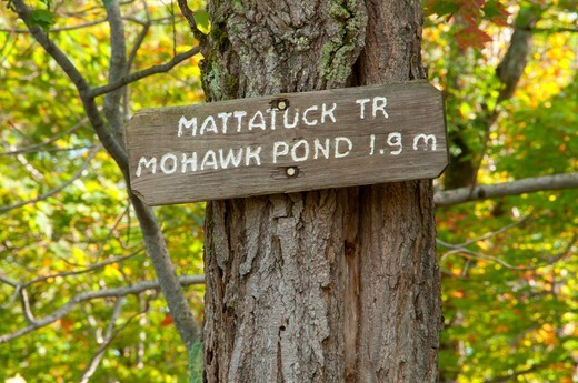 Stock Photo: 1596-3448 USA, Connecticut, Mohawk State Forest, Mattatuck trail sign on tree