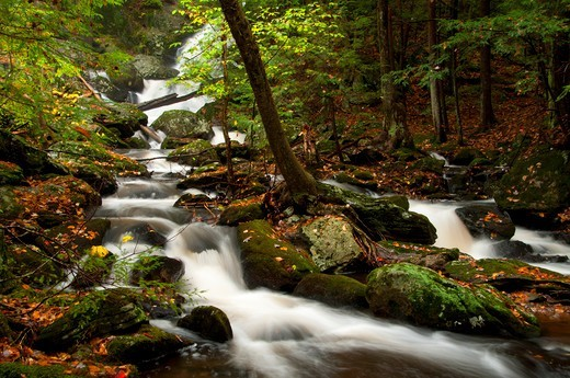 USA, Connecticut, Buttermilk Falls Preserve, Forest landscape with Buttermilk Falls : Stock Photo
