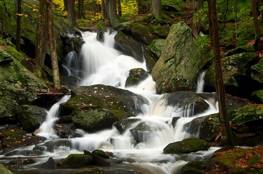 Stock Photo: 1596-3467 USA, Connecticut, Buttermilk Falls Preserve, Forest landscape with Buttermilk Falls