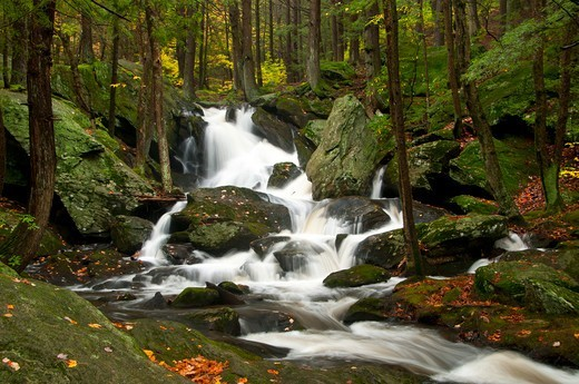 Stock Photo: 1596-3468 USA, Connecticut, Buttermilk Falls Preserve, Forest landscape with Buttermilk Falls
