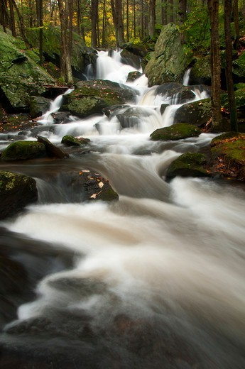 Stock Photo: 1596-3469 USA, Connecticut, Buttermilk Falls Preserve, Forest landscape with Buttermilk Falls