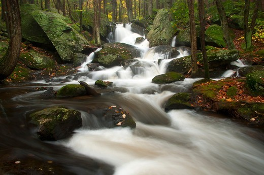 Stock Photo: 1596-3470 USA, Connecticut, Buttermilk Falls Preserve, Forest landscape with Buttermilk Falls