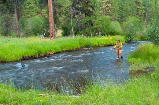 Stock Photo: 1596-3688 USA, Oregon, Malheur National Forest, Malheur Wild and Scenic River, Woman Fly fishing