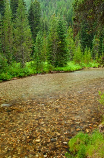 Stock Photo: 1596-3746 USA, Oregon, Wallowa-Whitman National Forest, Lostine Wild and Scenic River at Pole Bridge