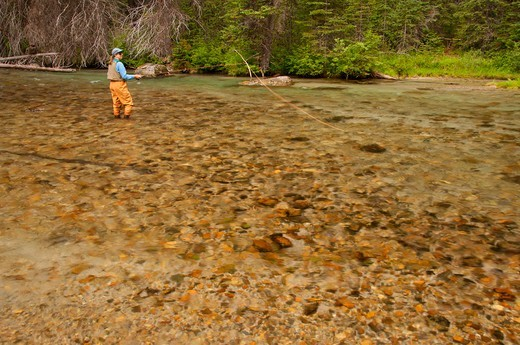 USA, Oregon, Wallowa-Whitman National Forest, Lostine Wild and Scenic River at Pole Bridge, Flyfishing : Stock Photo