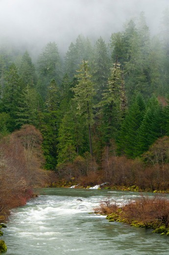 Stock Photo: 1596-3842 River flowing through a forest, North Umpqua River, North Umpqua River National Recreation Trail, Rogue-Umpqua Scenic Byway, Umpqua National Forest, Oregon, USA