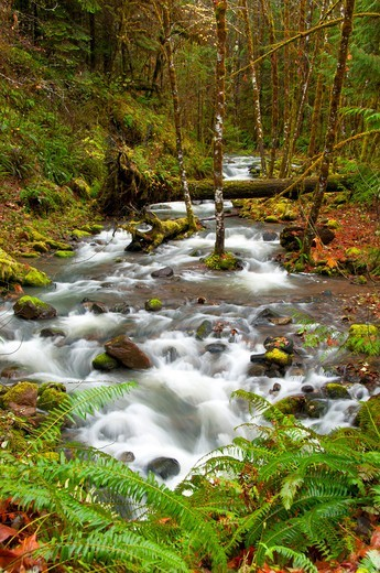 Stock Photo: 1596-3844 Wright Creek along North Umpqua River National Recreation Trail, Rogue-Umpqua Scenic Byway, Umpqua National Forest, Oregon, USA