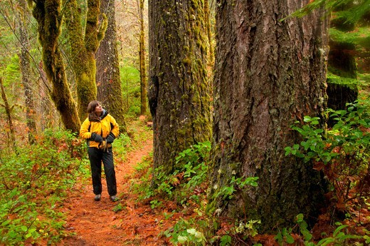 Stock Photo: 1596-3847 Female hiker in a forest, North Umpqua River National Recreation Trail, Rogue-Umpqua Scenic Byway, Umpqua National Forest, Oregon, USA
