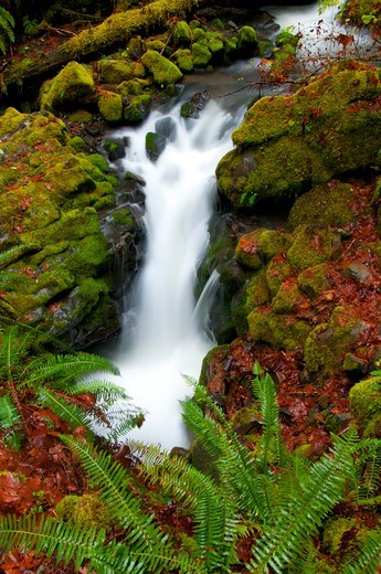 Stock Photo: 1596-3852 Falls Creek along Falls Creek Falls National Recreation Trail, North Umpqua Wild And Scenic River, Rogue-Umpqua Scenic Byway, Umpqua National Forest, Oregon, USA