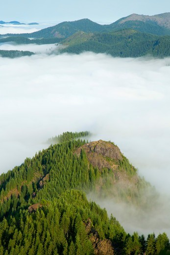 Fog from Kings Mountain Trail, Tillamook State Forest, Oregon, USA : Stock Photo