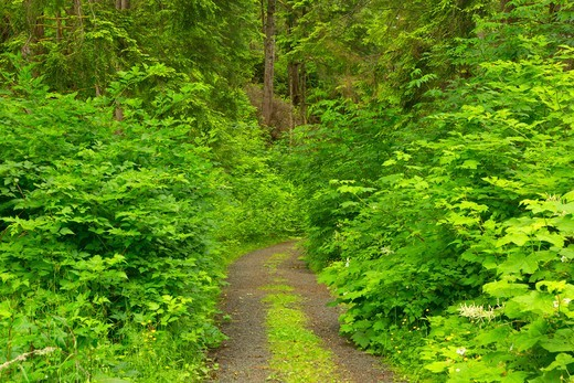 Trail in a forest, Fort to Sea Trail, Fort Clatsop National Memorial, Lewis and Clark National Historic Trail, Lewis and Clark National Historical Park, Oregon, USA : Stock Photo