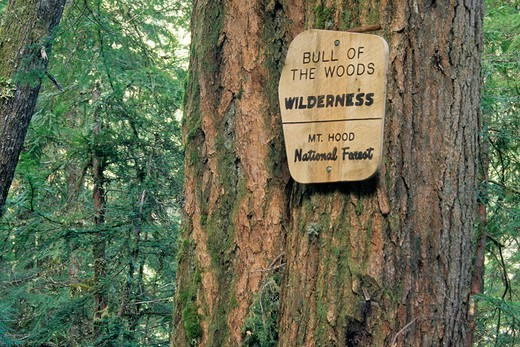 Stock Photo: 1596-4065 Wilderness boundary sign on Dickey Creek Trail, Bull Of The Woods Wilderness, Mt Hood National Park, Portland, Oregon, USA