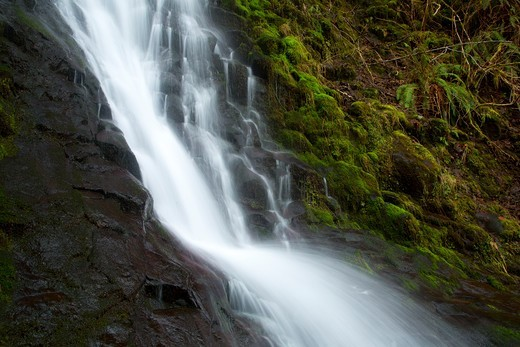 Stock Photo: 1596-4476 USA, Oregon, Tillamook State Forest, Bridge Creek Falls