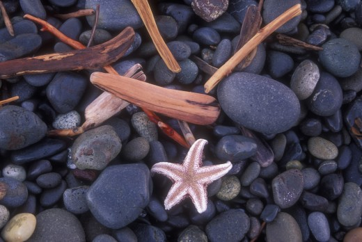 Stock Photo: 1596-558 High angle view of a starfish on pebbles