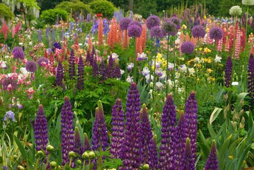 Flowers in a garden, Schreiner's Iris Gardens, Keizer, Marion County, Oregon, USA : Stock Photo