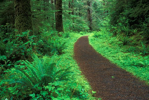 Trail passing through a forest, Cummins Creek Trail, Cummins Creek Wilderness, Siuslaw National Forest, Oregon, USA : Stock Photo