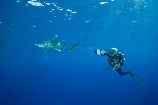 Stock Photo: 1597-101653 Oceanic Whitetip Shark, Carcharhinus longimanus,