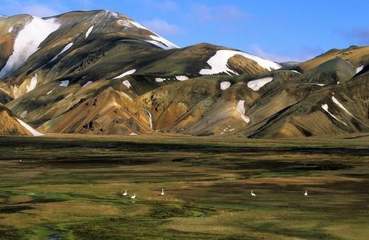 Landmannalaugar, Iceland, landscape, scenery, colo : Stock Photo
