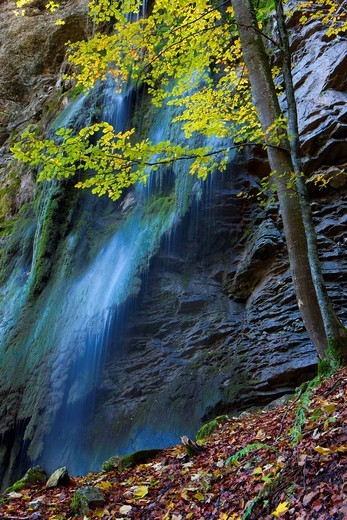 Stock Photo: 1597-105889 Jaunbach canyon, Switzerland, Europe, canton Freiburg, rock, cliff, brook, Bach, waterfall, moss, tree, beech, book, autumn