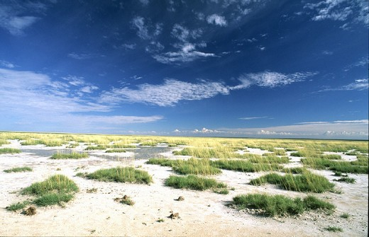 Andoni plain, Etosha, national park, scenery, Namibia, Africa, width, broadness, : Stock Photo
