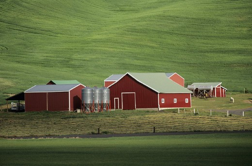 agriculture, barns, farm, Farm, fields, Palouse Hills, USA, America, United States, North America, Washington State, : Stock Photo