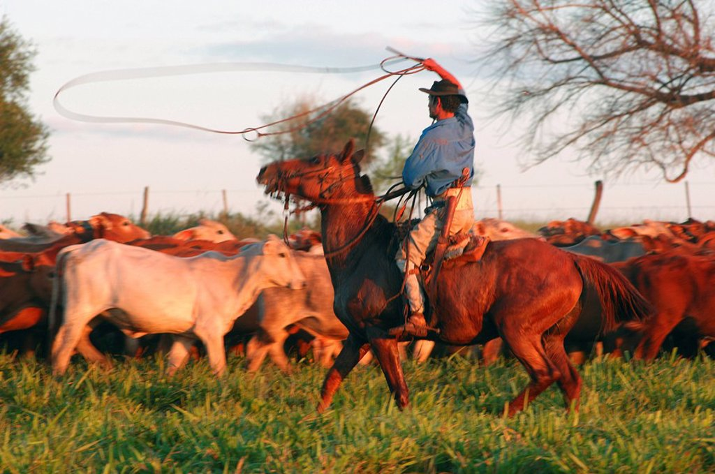 Argentina, South America, Gauchos, at work, Estancia Cecilia, Candelaria, Posadas, Misiones, South America, Gaucho, me : Stock Photo
