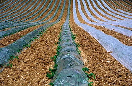 agriculture, farm product, food, feeding, food, eating, field work, France, Europe, spring, vegetables, vegetables f : Stock Photo