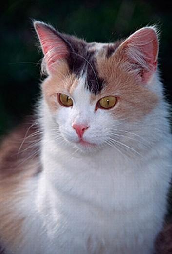 Stock Photo: 1597-11363  cat, nature, portrait, mammal, animal, beast,