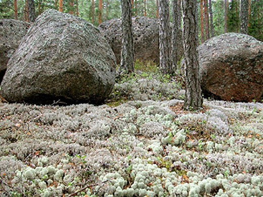 cliff, rock, cliff, rock vegetation, Finland, lichen, granite, scenery, nature, rest, cleanly, well, summer, stone, : Stock Photo