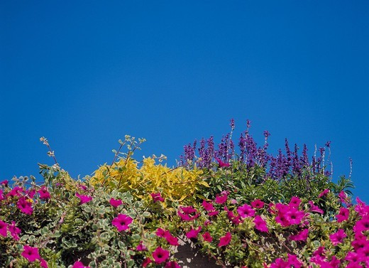 blossoms, flourishes, mauve, poor plant, wall, sky, flowers, colorful : Stock Photo