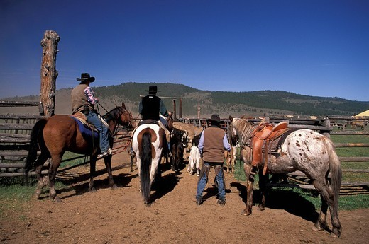 Stock Photo: 1597-116186 USA, America, United States, North America, Cowboys, herding cattle, Ponderosa Cattle and working guest ranch, eastern