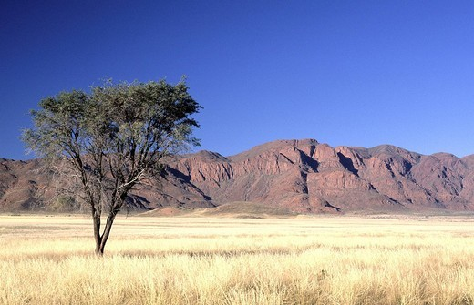 Stock Photo: 1597-116570 scenery, landscape, savanna, grassland, Africa, Namibia, South_West Africa, Namib Rand, reserve, mountains, red, tree,