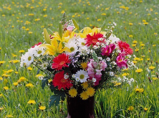 bouquet, iris, marguerites, lilies, dandelion, gerbera, dandelion meadow, : Stock Photo