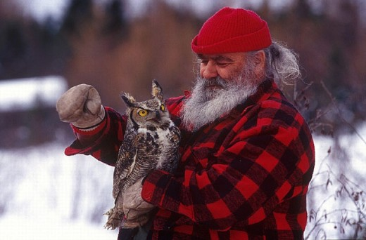 Stock Photo: 1597-11831 American eagle owl, Amos, animal, animals, beard, bird, birds, Bubo virginianus, Canada, North America, America, cap