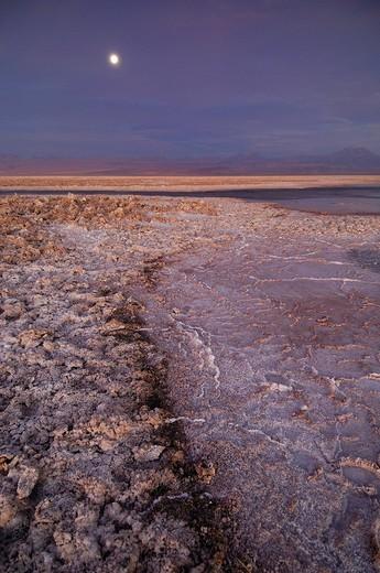Chile, South America, Laguna de Chaxa, Reserva Nacional Los Flamencos, San Pedro de Atacama, Altiplano, Antofagasta, l : Stock Photo