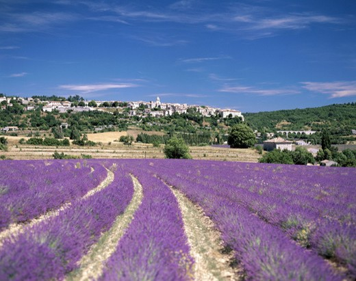 Stock Photo: 1597-121535  France, Europe, hill, scenery, lavender field, lavender, Provence, Vaucluse, clouds, weather,